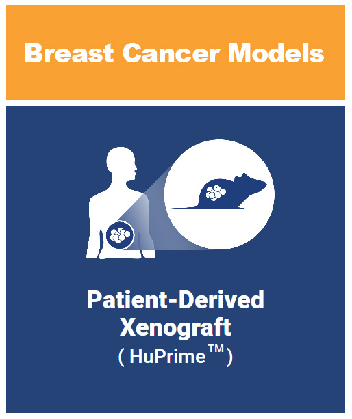 Breast cancer patient derived xenograft models